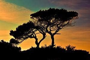 Images Cyprus Trees Silhouettes Cavo Greco Nature