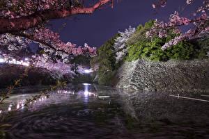 Обои Япония Парки Пруд Цветущие деревья Ветвь В ночи Koriyama Castle Park Природа