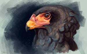 Pictures Painting Art Birds Eagle Head Beak Bateleur animal