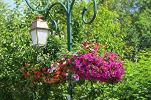 壁纸、、公園、ペチュニア、街灯、花
