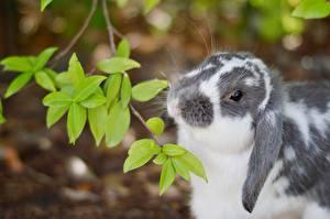 Fotos Kaninchen Ast Blatt Tiere