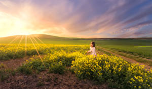 Wallpaper Landscape photography Sunrises and sunsets Fields Rapeseed Rays of light Little girls Nature