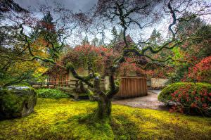 Hintergrundbilder Vereinigte Staaten Garten Gebäude Bäume HDR Laubmoose Ast Portland  Japanese Garden Natur