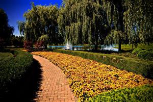 Fotos Vereinigte Staaten Park Tagetes Chicago Stadt Bäume Strauch Botanic Garden Natur