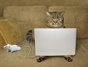 Image Cats Mice Laptops Sofa Funny Animals