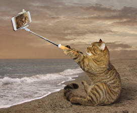 Images Creative Cats Coast Funny Smartphone Sitting Selfie animal