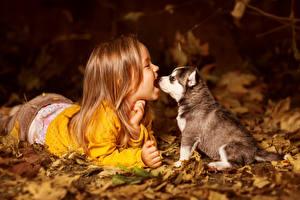 Papel de Parede Desktop Cão Husky siberiano Cachorrinho Menina Feliz Crianças Animalia