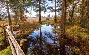 Image England Autumn Trees Reflected Swamp St.Leonards