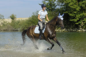 Pictures Equestrian sport  Horses Water Running Spray Helmet Sport Girls