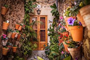 Fotos Blumentopf Tür Blüte