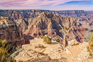 Fotos Grand Canyon Park Vereinigte Staaten Park Canyon Felsen