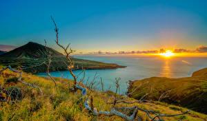 Fotos Sonnenaufgänge und Sonnenuntergänge Küste Landschaftsfotografie Hawaii Sonne Hügel Ast Gras Natur