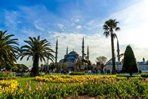Bakgrundsbilder på skrivbordet Turkiet Istanbul Tempel Parker Tulpansläktet Blå moskén, Istanbul Palmer Städer