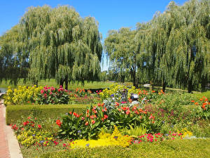 Fotos Vereinigte Staaten Park Chicago Stadt Bäume Botanic Garden Natur