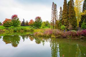 Fotos USA Park Teich Chicago Stadt Bäume Strauch Botanic Garden Natur