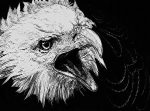 Image Birds Eagles Painting Art Head Black and white Black background Beak animal
