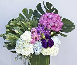 Fondos de escritorio Ramos Rosas Hydrangea Fondo gris flor