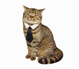 Image Cats Creative White background Necktie Sitting Funny Animals
