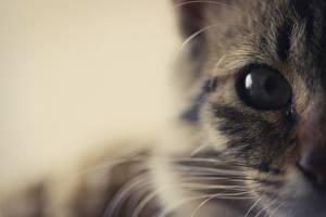 Hintergrundbilder Katze Tiere
