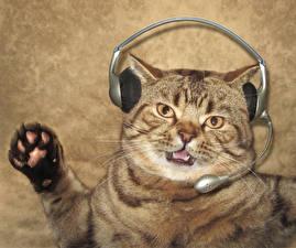 Tapety na pulpit Kreatywne Kot domowy Zabawne Słuchawki Mikrofon Zwierzęta
