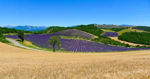 Hintergrundbilder Frankreich Landschaftsfotografie Felder Lavendel Puimichel Natur