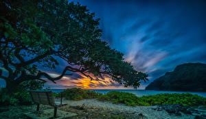 Bilder Tropen Sonnenaufgänge und Sonnenuntergänge Küste Himmel Vereinigte Staaten Hawaii Bank (Möbel) Ast Makapuu Beach Waimanalo Natur