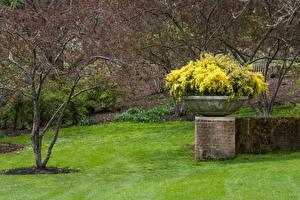Fotos Vereinigte Staaten Park Frühling Chicago Stadt Rasen Botanic Garden Natur