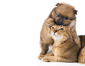 Wallpapers Cat Dogs White background 2 Puppies Animals