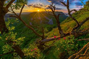 Bilder Krim Russland Sonnenaufgänge und Sonnenuntergänge Landschaftsfotografie Hügel Ast Natur