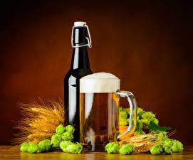Photo Drink Beer Hops Mug Bottle Foam Spike Food