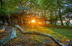 Fotos England HDR Bäume Lichtstrahl Blatt Ast Fritham Natur