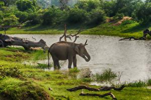 Bilder Sri Lanka Elefanten Flusse Yala National Park ein Tier