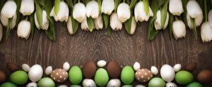 Fondos de escritorio Tulipa Pascua Huevo Blanco Flores