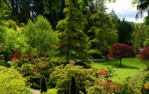 Image Canada Gardens Trees Bush Spruce Butchart Gardens Nature