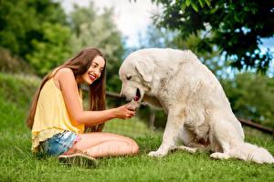 壁纸,,犬,棕色的女人,微笑,坐,寻回犬,女孩,動物,