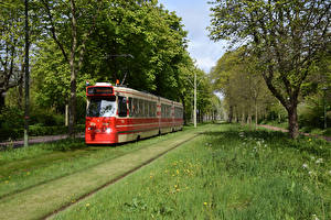 Wallpapers Netherlands Railroads Trees Grass Tram Trams in The Hague Nature