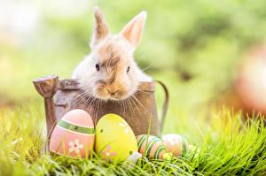 Pictures Rabbit Easter Eggs Grass