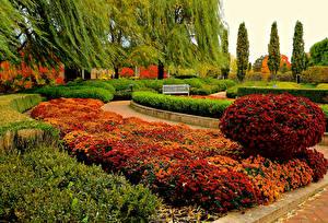 Fotos USA Garten Chrysanthemen Chicago Stadt Design Strauch Botanic Garden Natur