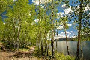 Fotos USA Frühling Flusse Birken Weg Utah