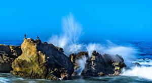 Fotos USA Wasserwelle Möwe Meer Kalifornien Felsen Wasser spritzt Laguna Beach Natur