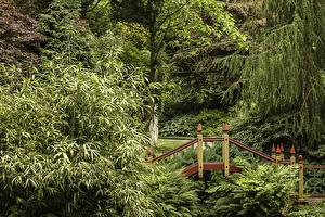 Picture United Kingdom Gardens Bridges Trees Biddulph Grange Japanese Garden Nature