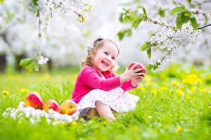 Bilder Äpfel Blühende Bäume Kleine Mädchen Lächeln Ast Sitzend kind