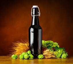 Pictures Beer Humulus Colored background Bottle Ear botany