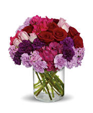 Papel de Parede Desktop Buquês Rosa Dianthus Phlox Fundo branco flor
