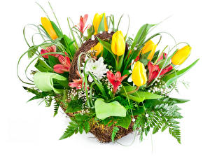 Pictures Bouquets Tulip Alstroemeria White background Flowers