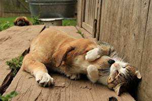 Bilder Hunde Katze Süßes Tiere