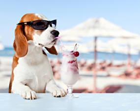 Wallpaper Dogs Mixed drink Eyeglasses Stemware Funny Beagle