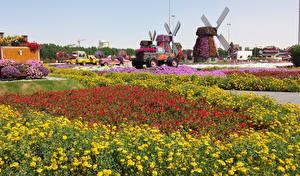 Images Dubai Gardens Tagetes Petunia Emirates UAE Design Miracle Garden Nature