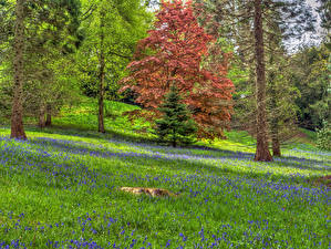 Wallpapers England Forests Trees Spruce Ardingly Nature