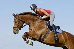 Wallpapers Equestrian sport  Horses Helmet Jump Sport Girls